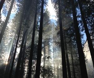 groupement-foncier-forestier
