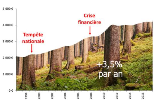 GFF-investir-bois-foret